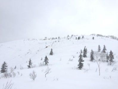 クリスマスツリーの山