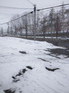 本州は桜吹雪、後志は吹雪
