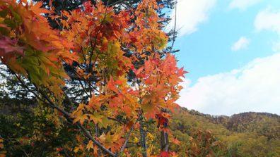 秋の後志・赤く染まる山編