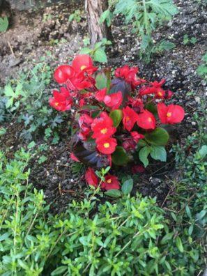 お花のその後Part2