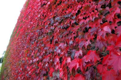 秋の後志・燃える壁面編