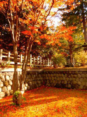 冬も間近の雰囲気ですが・・・秋をお届け。