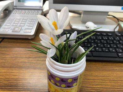 春のお便り。