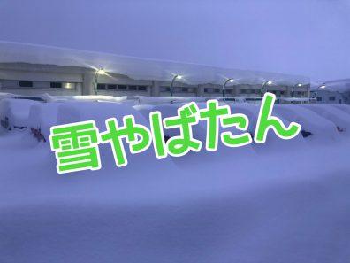 東京海上日動 DAPに、、、