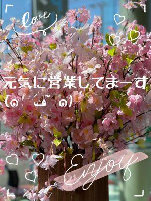春ですね~~(*'ω'*)今日も元気に営業中デス(*´ω`*)